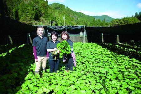 日本農業新聞にわさび屋が掲載されました